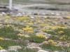 ปากีสถาน : มวลดอกไม้บนที่ราบสูงดิโอไซ