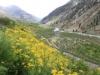 ปากีสถาน : มวลดอกไม้ก่อนถึงที่ราบสูงดิโอไซ