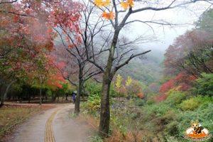 ใบไม้เปลี่ยนสีแนจังซาน